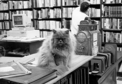 book shop and cat