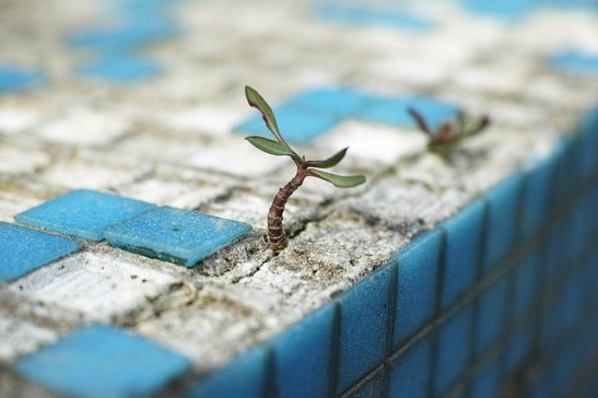 plant growing in a crack