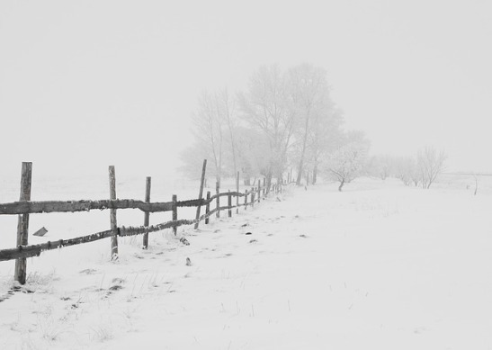 winter-20248_640