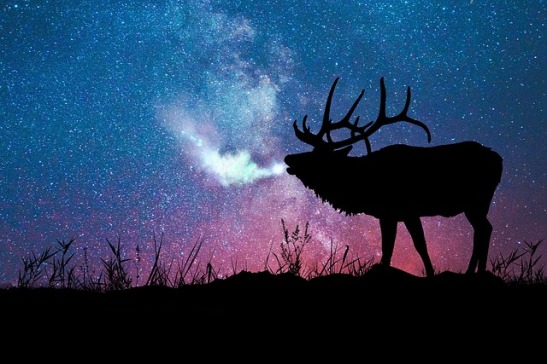 starry night with moose