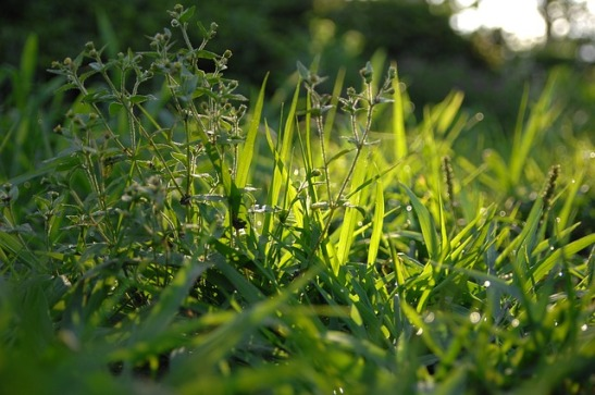 morning-dew-3387710_640